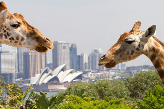 Wildlife Education Workshop at Taronga Zoo